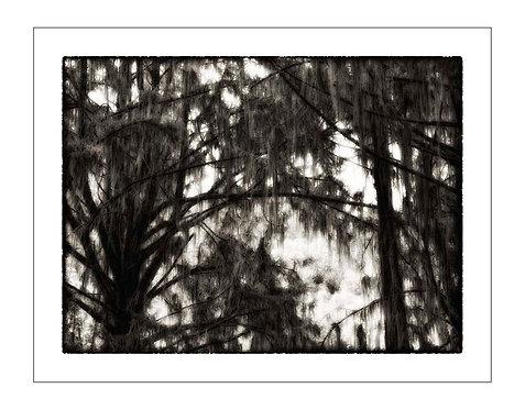 TreesOfKili_A0006