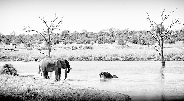 EOK_Wildlife_e58