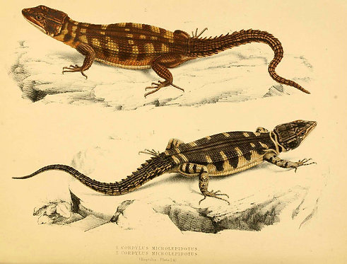 Insects/Reptiles_A4045