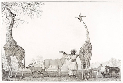 Mammals_A2001