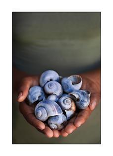 Oceans & Shells