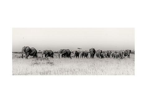EOK_Wildlife_e89
