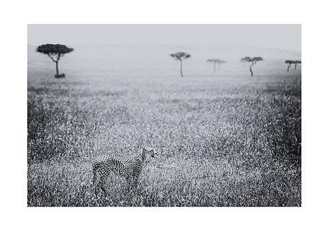EOK_Wildlife_e111