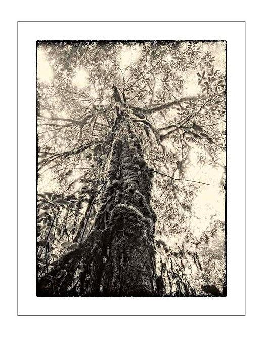 TreesOfKili_A0016