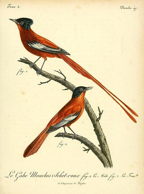 Birds_A4032