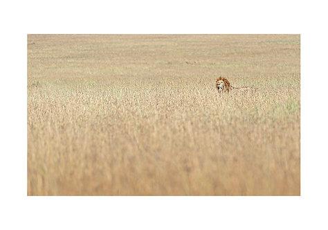 EOK_Wildlife_e134