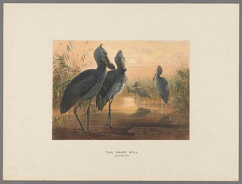 Birds_A4024
