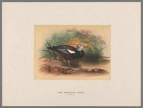 Birds_A4021