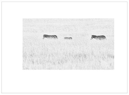 EOK_Wildlife_MM029