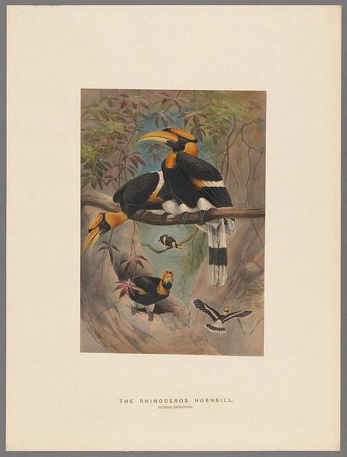 Birds_A4020
