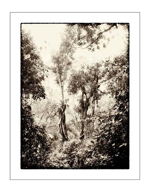 TreesOfKili_A0021