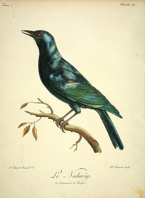 Birds_A4034