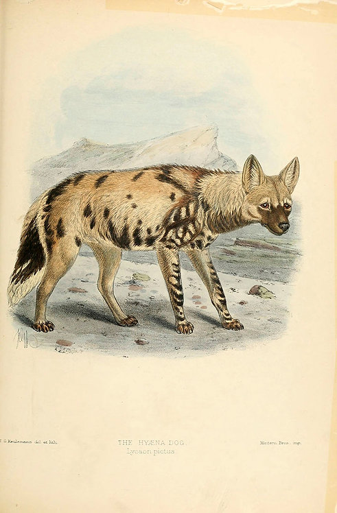 Mammals_A3016