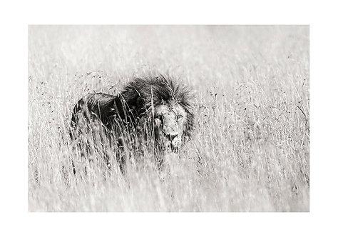 EOK_Wildlife_e130
