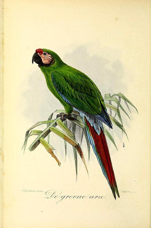 Birds_A4030
