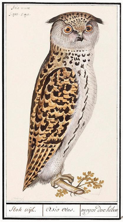 Birds_A3020