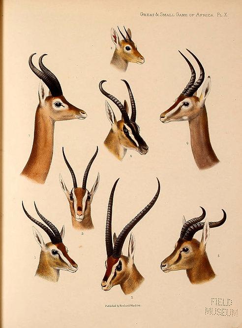Mammals_A3012