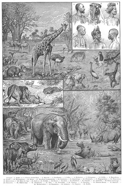 Mammals_A4018
