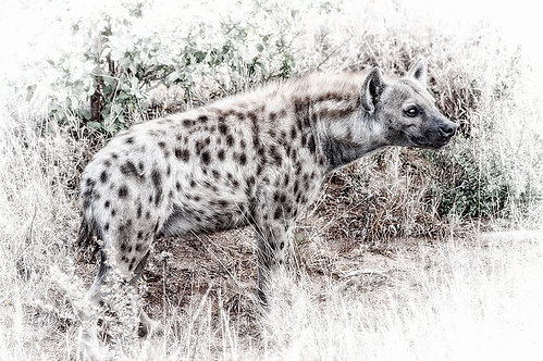 EOK_Wildlife_e83