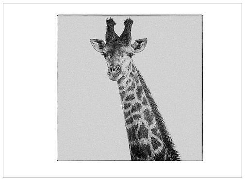 EOK_Wildlife_MM044b