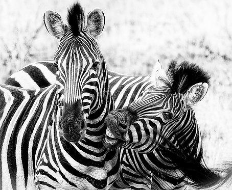 EOK_Wildlife_e70