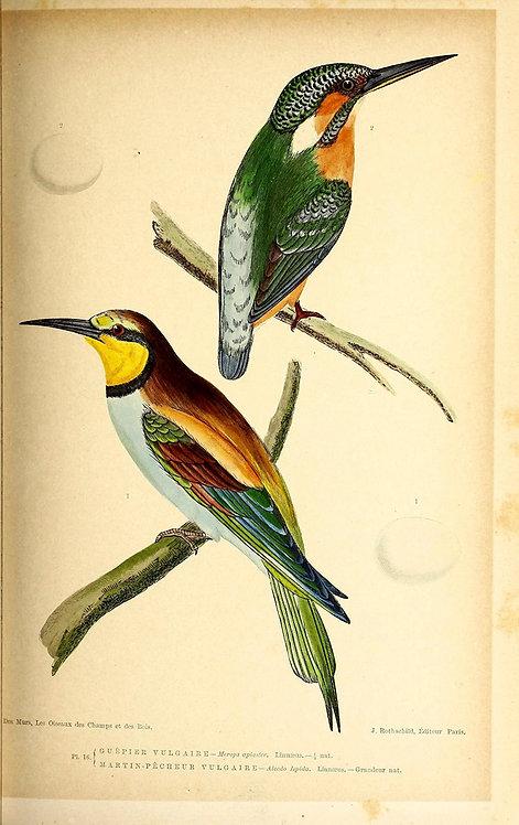 Birds_A4028