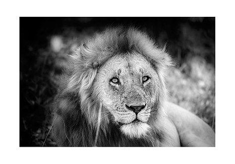 EOK_Wildlife_e105