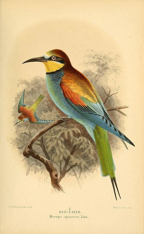 Birds_A4008