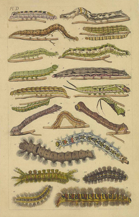 Insects/Reptiles_A4033
