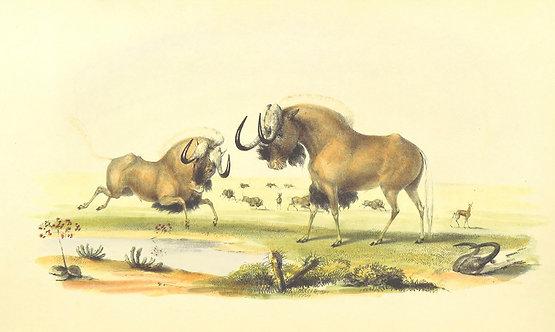 Mammals_A0002