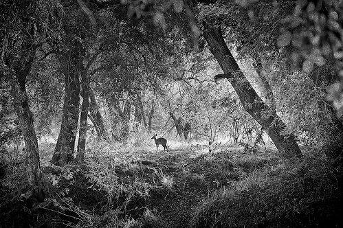 EOK_Wildlife_e59