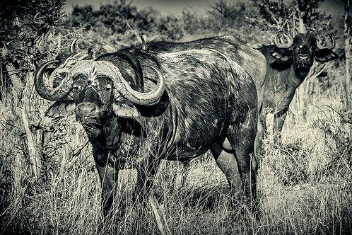 EOK_Wildlife_e53