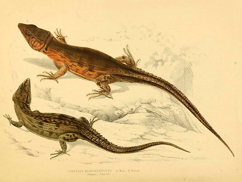 Insects/Reptiles_A4044