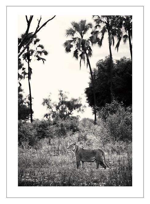 EOK_Wildlife_e17