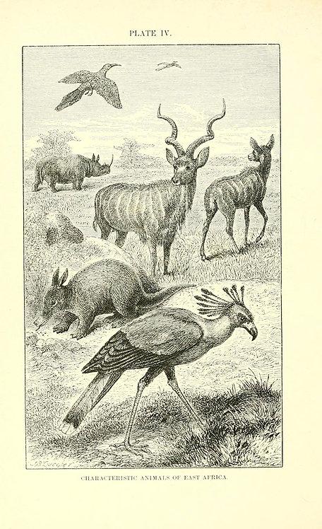 Mammals_A3003