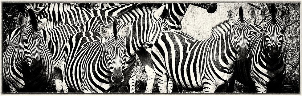 EOK_Wildlife_e44