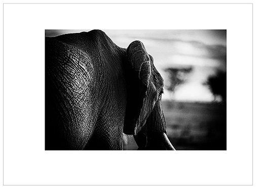 EOK_Wildlife_MM041