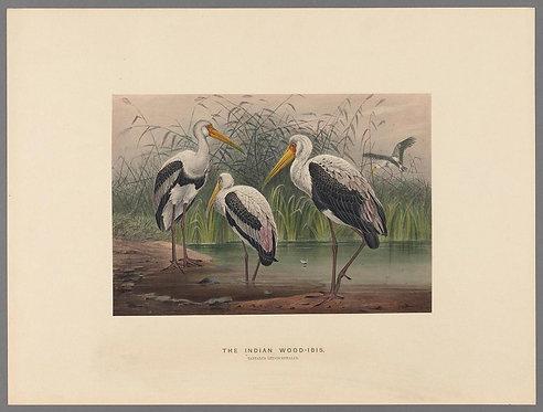 Birds_A4016