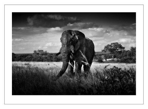 EOK_Wildlife_e23
