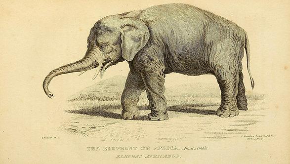 Mammals_A3006