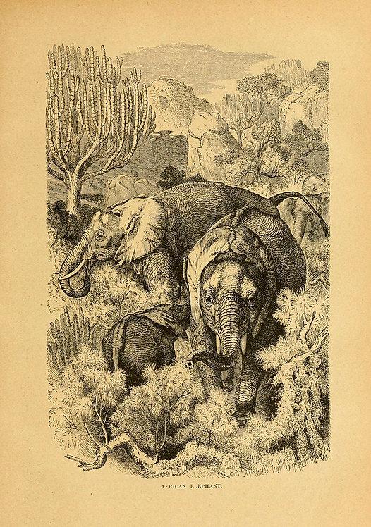 Mammals_A3005