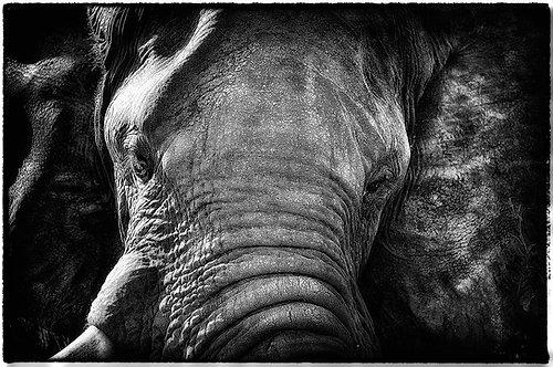EOK_Wildlife_e61