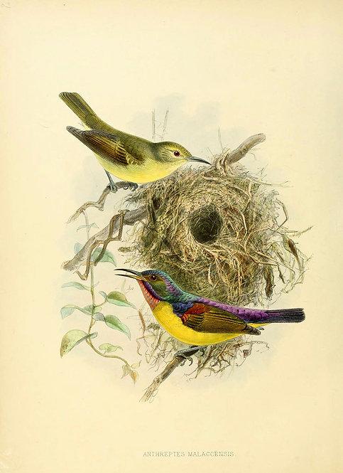 Birds_A4013