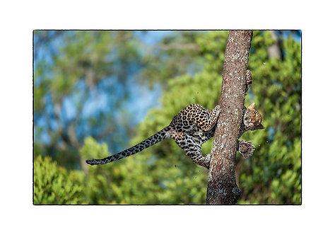 EOK_Wildlife_e101