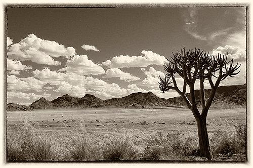 Dook_Landscapes_A0010