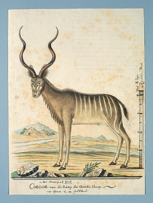 Mammals_A2013