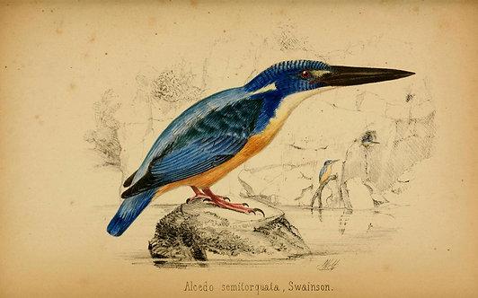 Birds_A4010