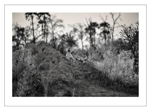 EOK_Wildlife_e21