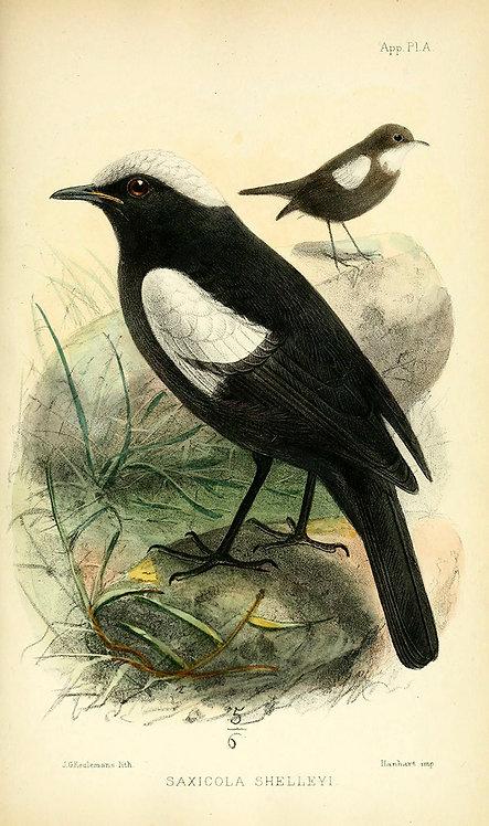 Birds_A4002