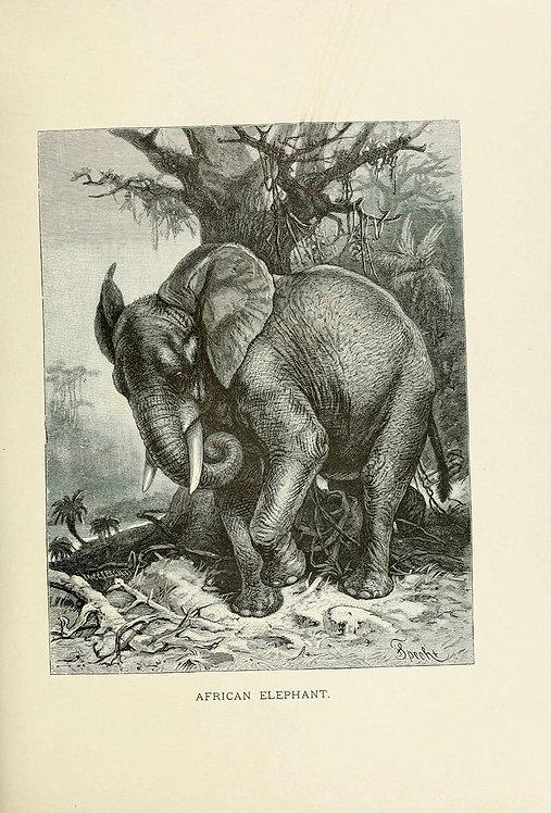 Mammals_A4008